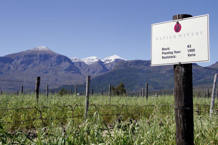 """Pressemitteilung von Napier Vineyards: Mit gutem Gewissen genießen – Projektwein """"14 Homes"""""""