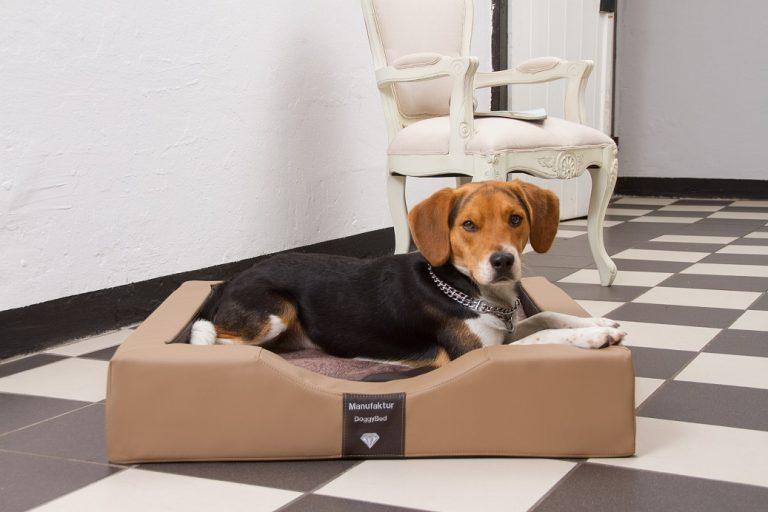 Ein Hundebett der Luxusklasse